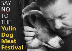 "Meme with man comforting dog and text, ""Say No To The Yulin Dog Meat Festival"""