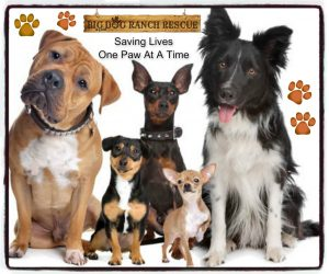 promotional poster showing a variety of dog breeds that the Big Dog Ranch Rescue org save from being euthanized
