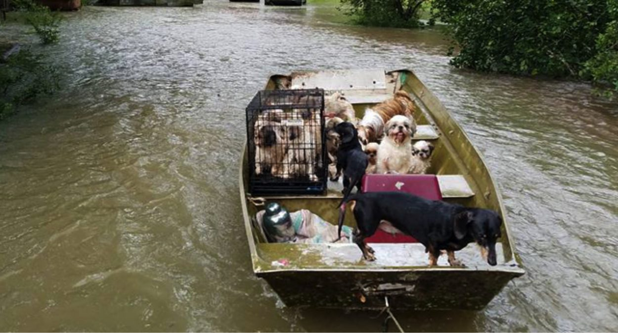 boat transporting flood stranded animals and displaced pets