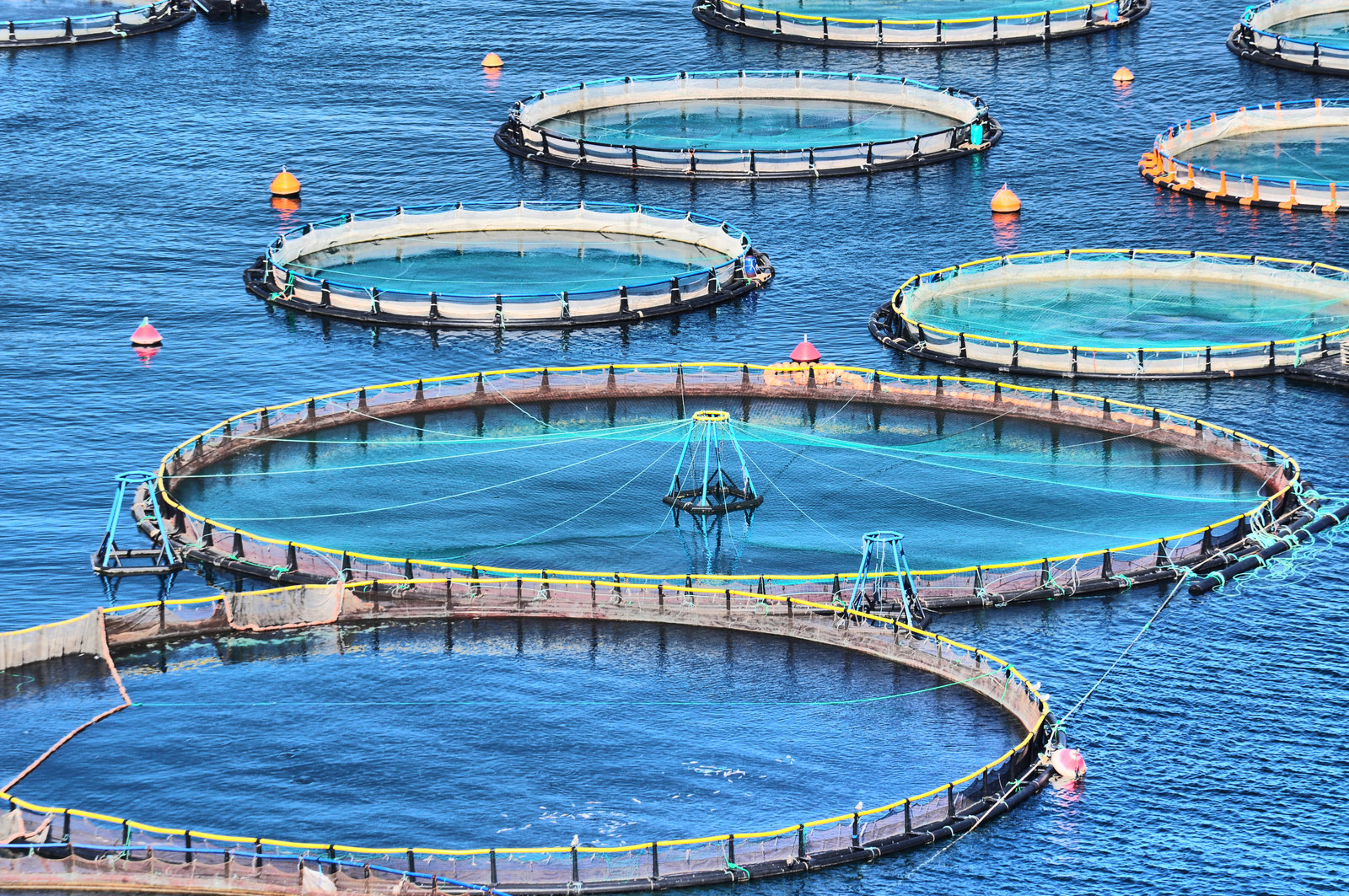 picture of fish farming environment where fish are confined in small enclosures