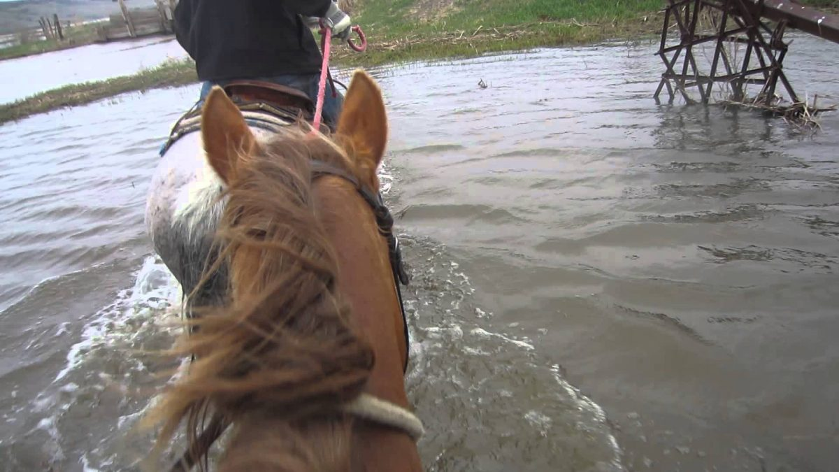 Horse stranded in S.E. Texas flooding, being escorted to dry ground by rescue volunteers