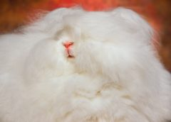 Animal Farming – Rabbits Abused For Fur and Meat; We Must Be Their Voice