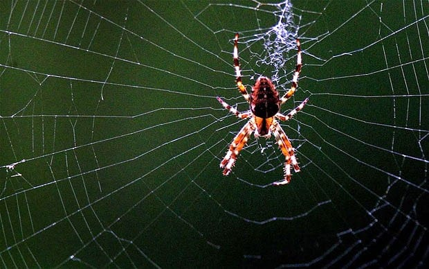 spider web and bright multi-colored large spider at center spinning additional strands of silk webbing