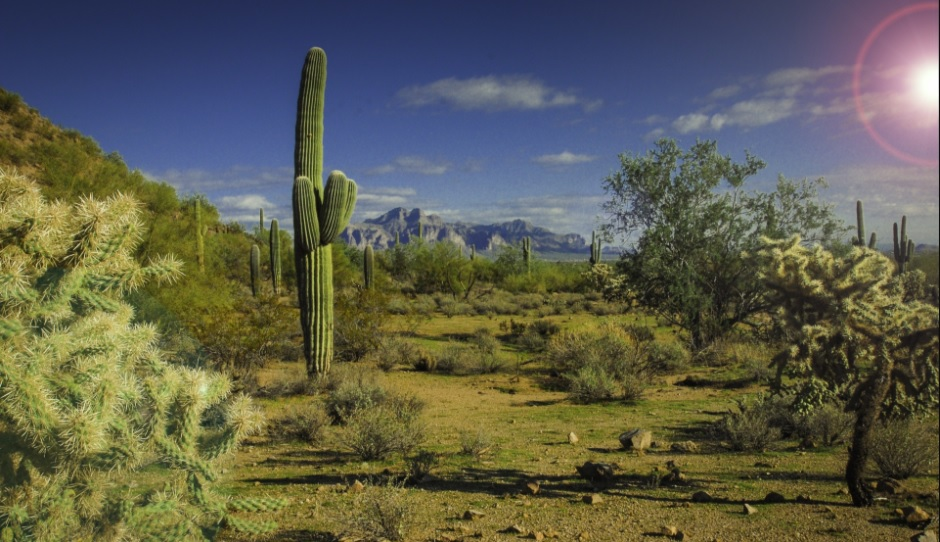 scenic photo of Saguaro and other cactus and desert plants in Southern Arizona