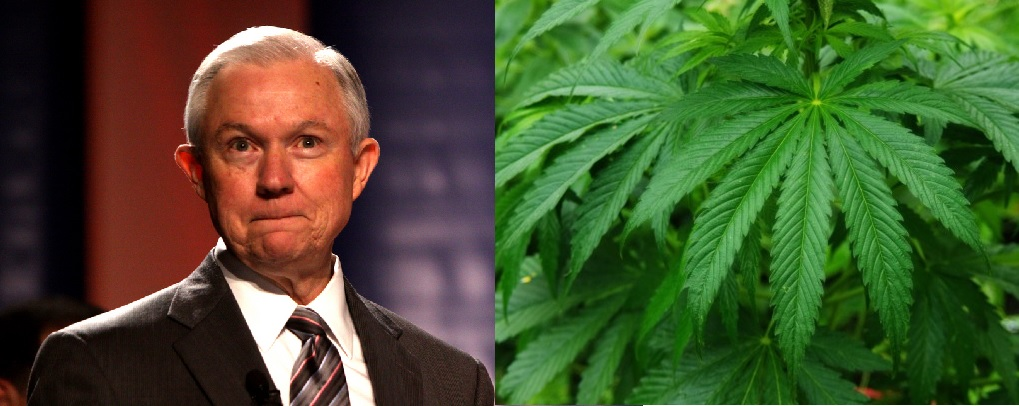 montage of Atty General Jeff Sessions on the image left and verdant Cannabis Sativa plant to his right