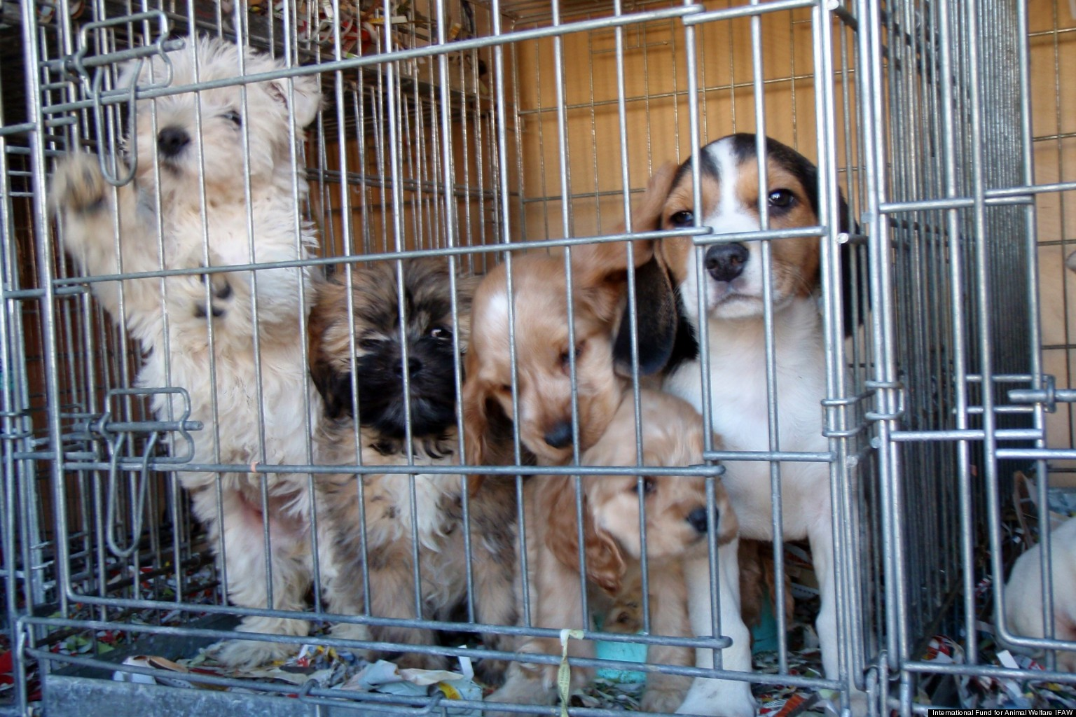 The Horrors Of Puppy Mills Please Adopt And Do Not Shop National
