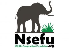 Nsefu Wildlife Conservation Foundation – The Dream That Became a Reality and the Future