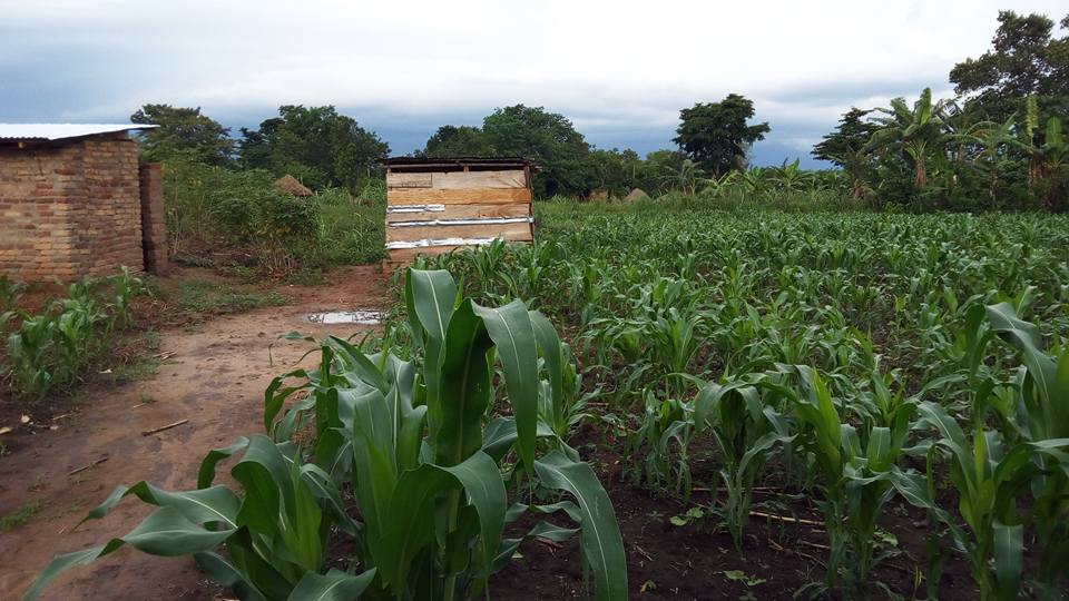 community farming at Neema Mission Centre - Maize crop