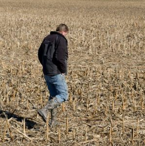 farmer touring a field scorched by drought.