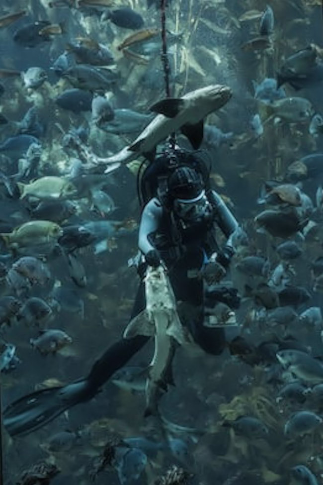Diver surrounded by hundreds of fish while feeding them